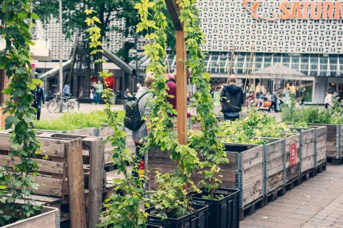 Mehrere Holzkästen stehen in der Bremer Innenstadt. Darin befinden sich verschiedene Pflanzen.