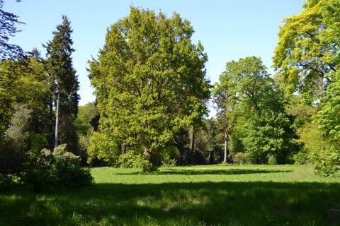 Eine Wiese in Wätjens Park