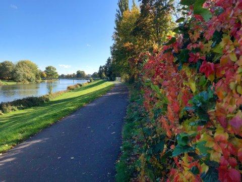Ein Weg führt am Werdersee entlang. Auf der rechten Seite säumen bunt gefärbte Blätter den Weg.