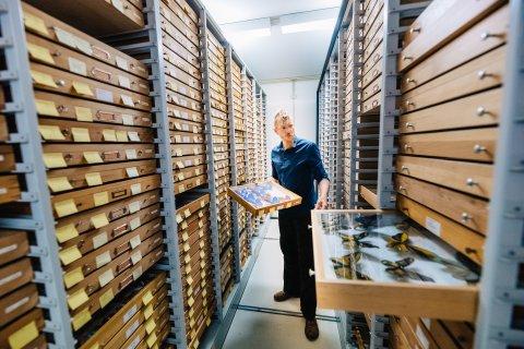 Ein Mann im Museumsarchiv
