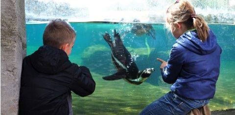 Zwei Kinder betrachten einen Pinguin in einem Wasserbecken