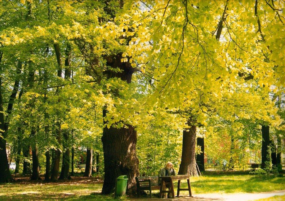 Baumalleen auf dem Gelände der Egestorff-Stifung