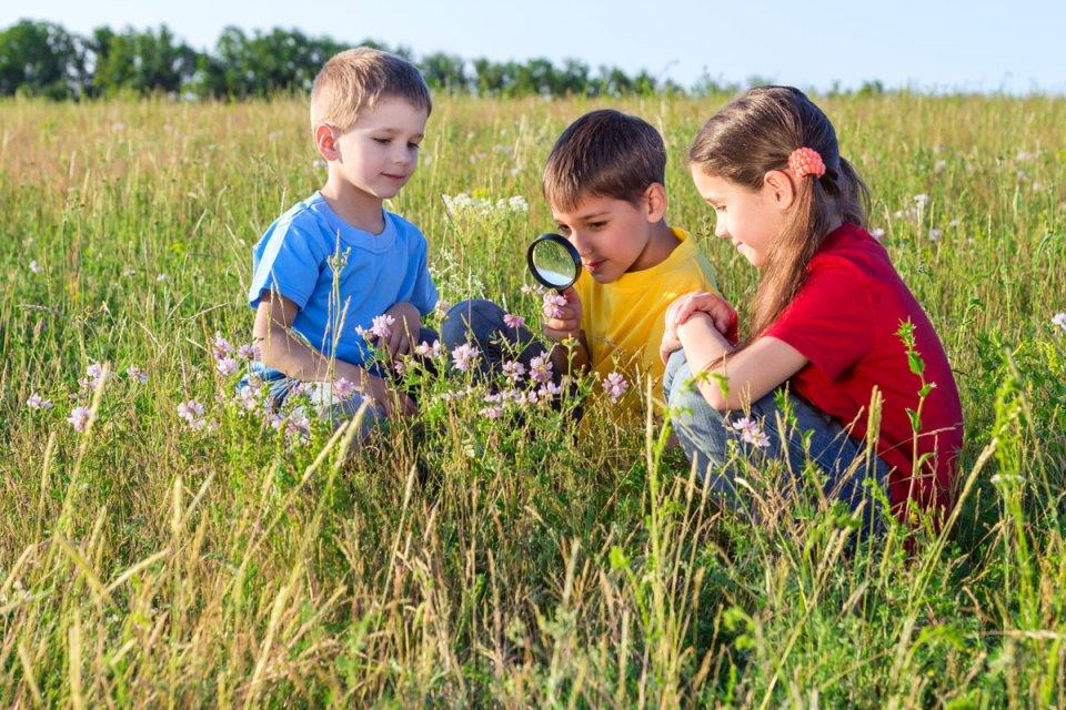 Drei Kinder sitzen auf einer Wiese und betrachten eine Pflanze durch eine Lupe (Foto: Fotolia / Sergiy Bykhunenko)