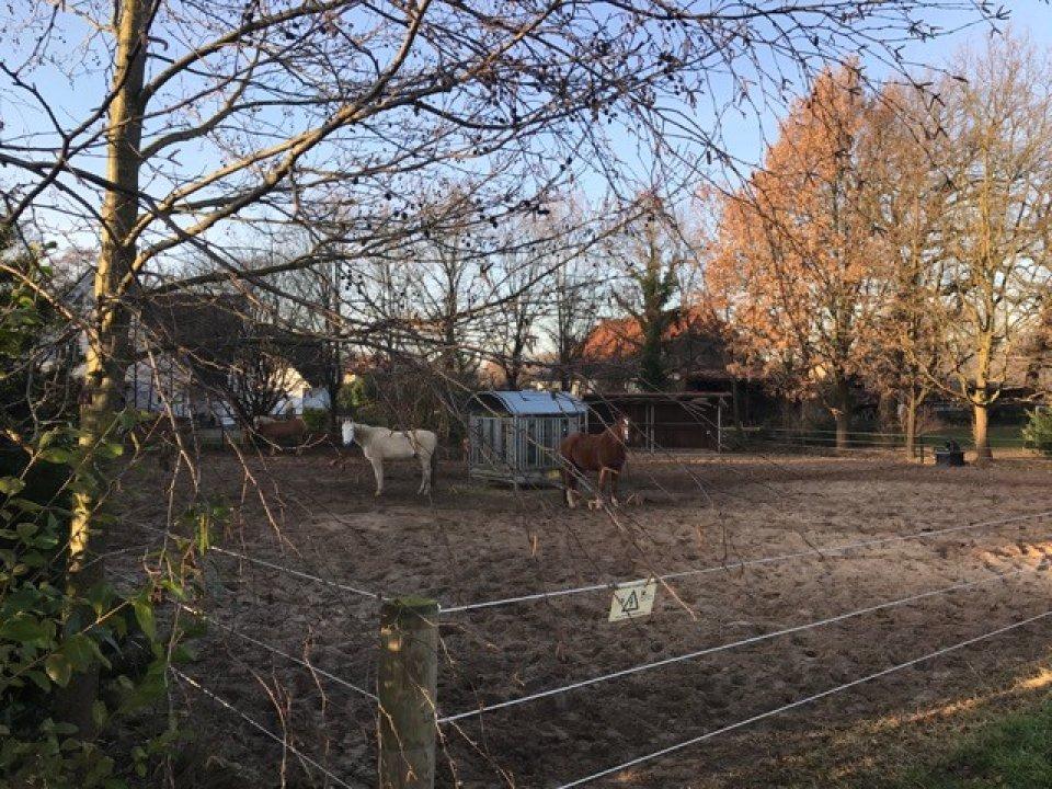 Pferde am Hodenberger Deich