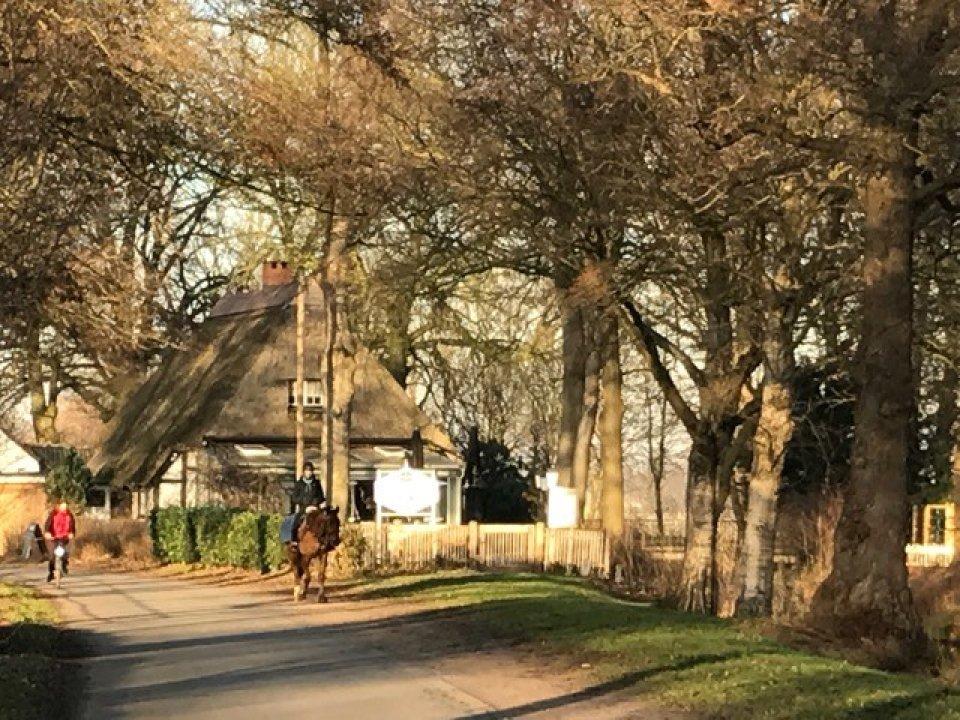 Ein reetgedecktes Haus, Spaziergänger und eine Reiterin am Hodenberger Deich