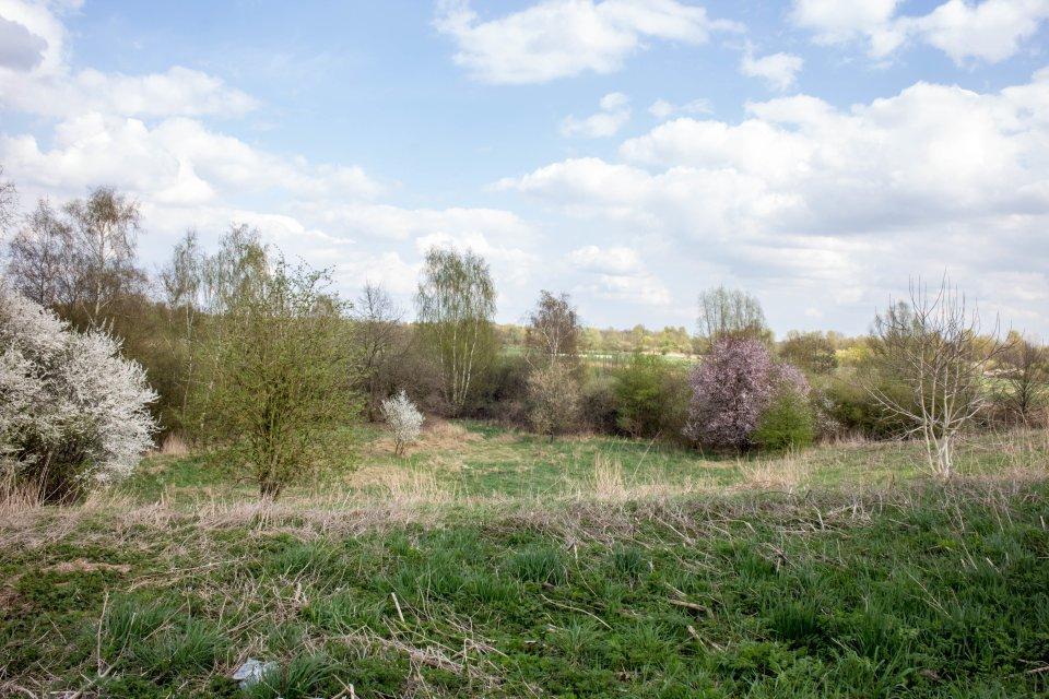 Grüne Wiesen im Frühling