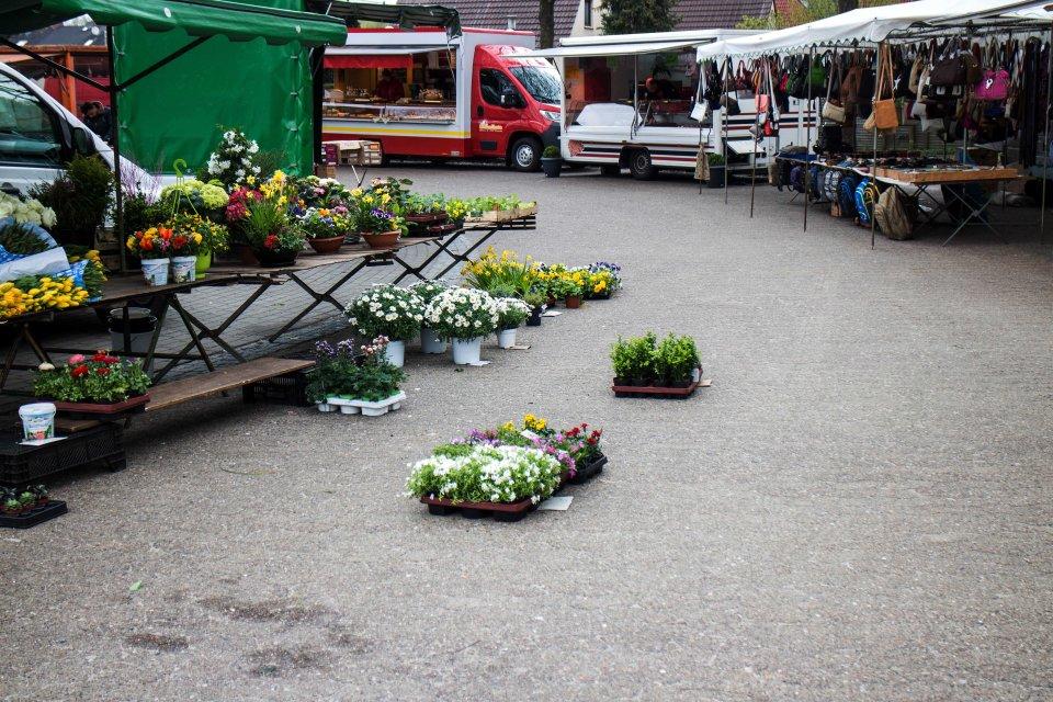 Ein Marktstand mit Blumen auf einem Wochenmarkt