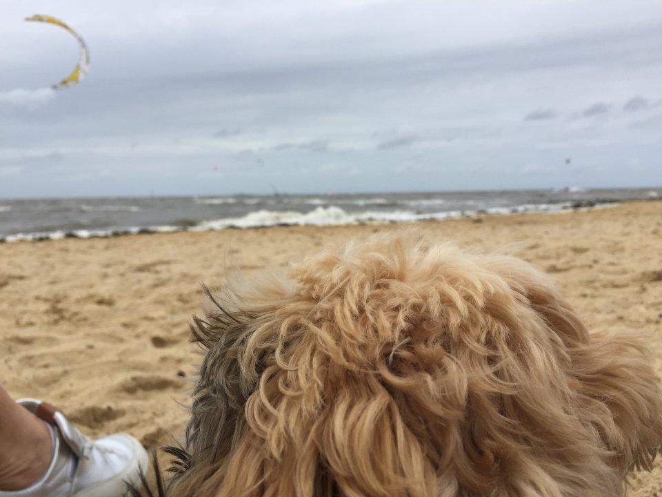 Am Strand von Sahlenburg sind auch Hunde erlaubt.