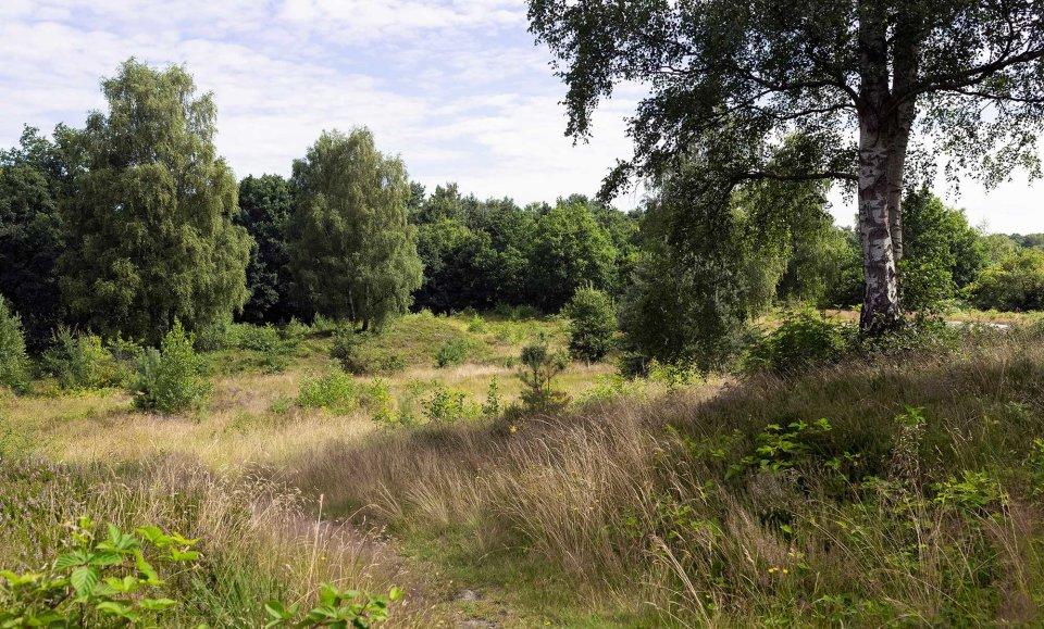 Bäume und Sträucher im Naturschutzgebiet Eispohl, Sandwehen und Heideweiher.