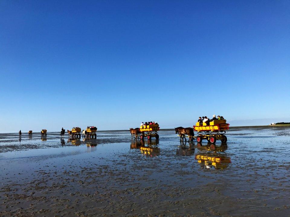 Die Sonne spiegelt sich im Wattenmeer. Es sind Kutschen zu sehen, die von Pferden durchs Watt gezogen werden.