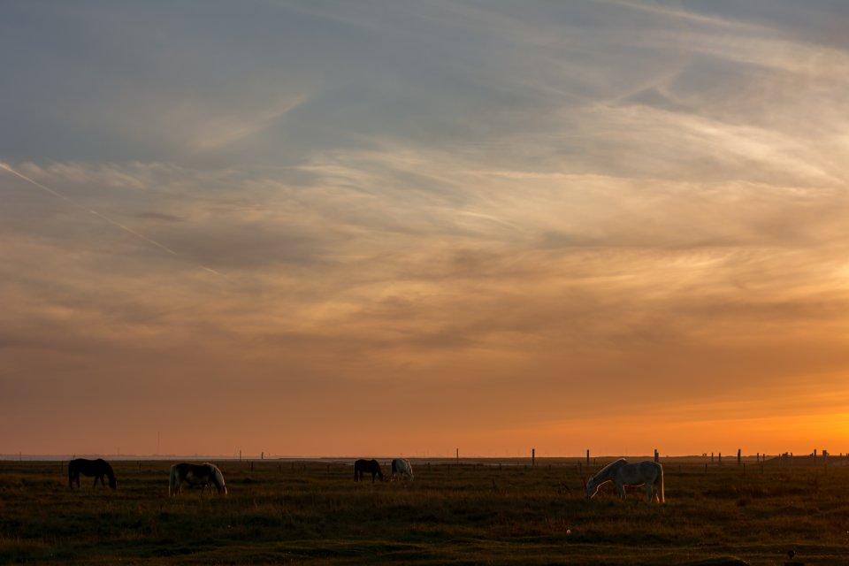 Eine grüne Wiese, auf der Pferde weiden. Der Himmel ist orange gefärbt.