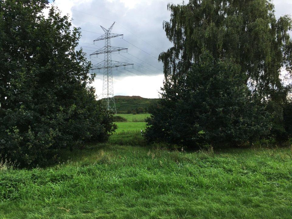 Ein Strommast zwischen zwei Bäumen auf einer grünen Wiese