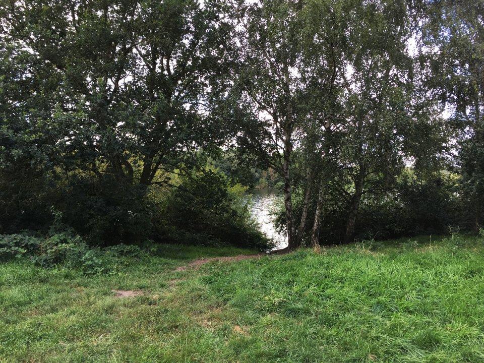 Kleiner Ausschnitt eines Sees, der von grünen Bäumen und Rasenflächen umgeben ist