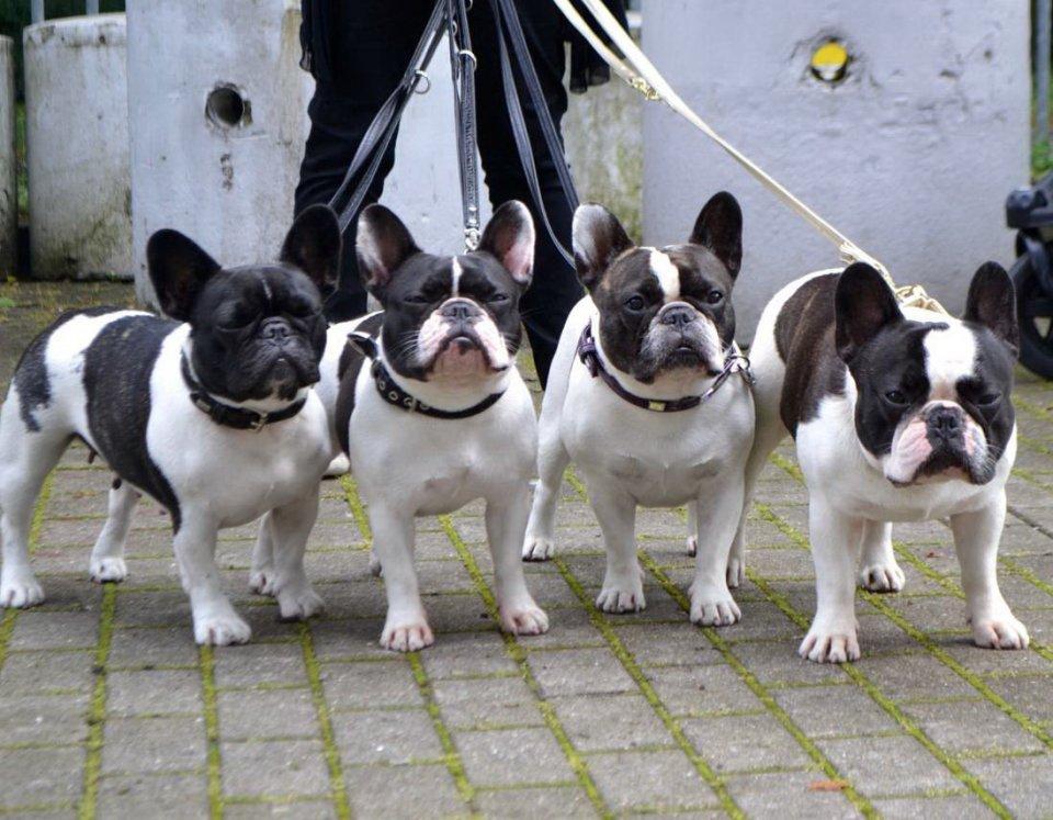Mehrere Hunde schauen in die Kamera