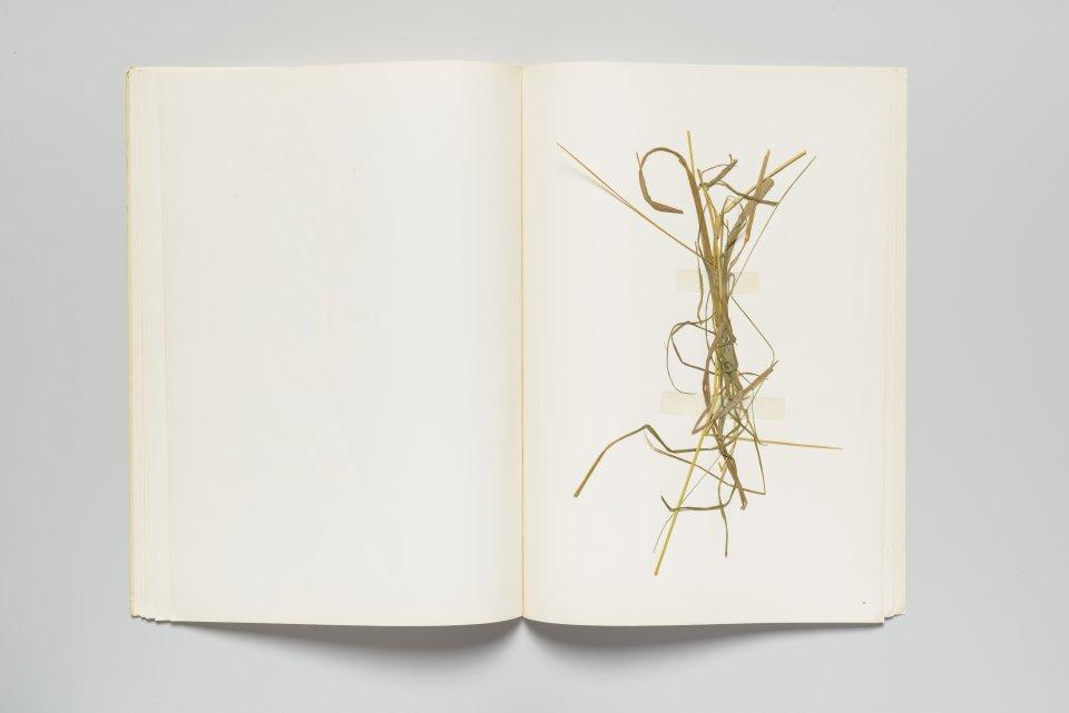 Collage aus Gras auf Papier