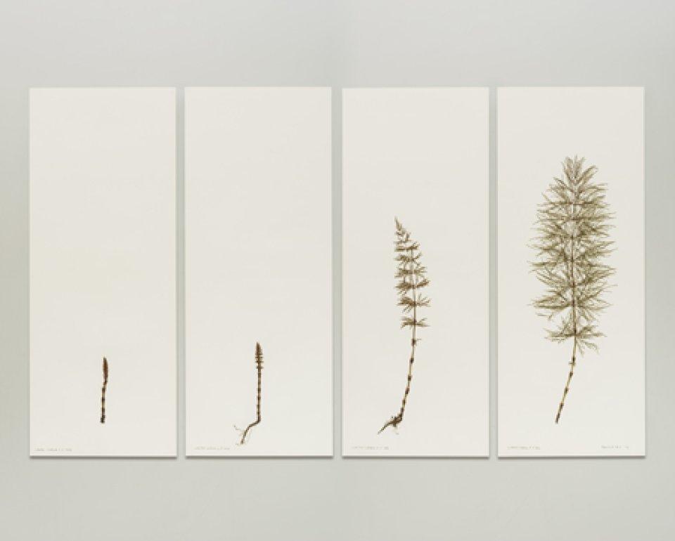 Collagen mit Originalpflanzen auf Papier