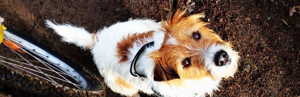 kleiner Hund der nach oben guckt