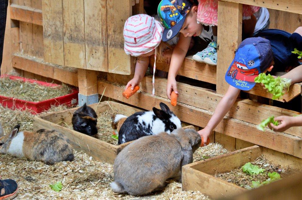 Kinder füttern Kaninchen mit Karotten.