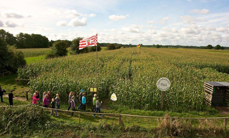 Eine Gruppe Kinder macht sich auf den Weg ins Oberneulander Mais Labyrinth.