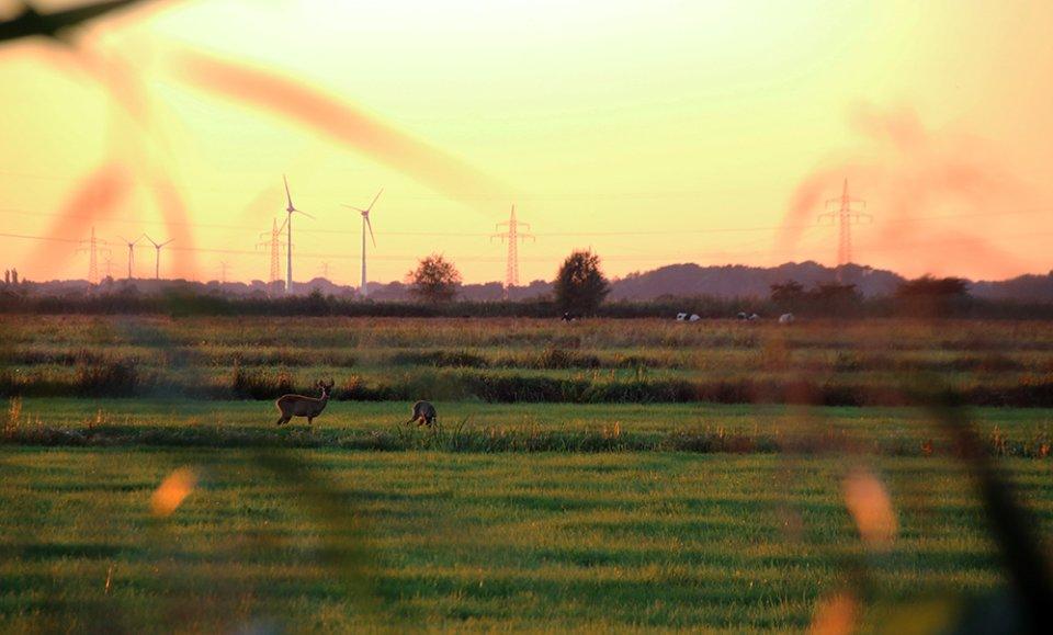 Zwei Rehe auf einer Wiese in der Abendsonne