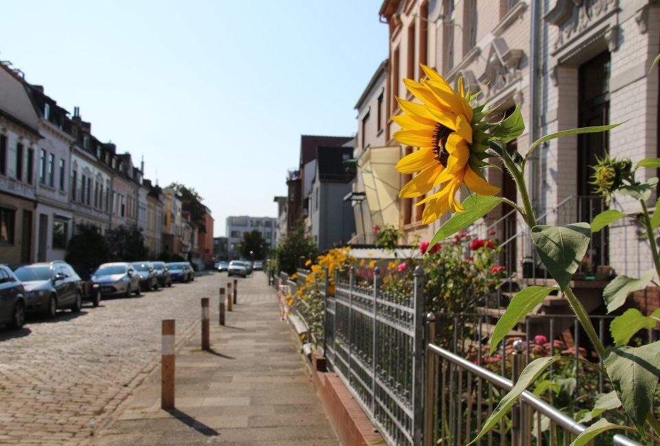 Eine Sonnenblume vor einem Haus in der Ritterhuder Straße in Gröpelingen (Quelle: WFB/bremen.online).