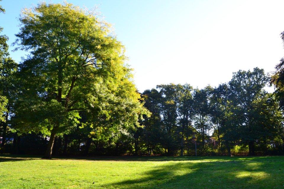Waller Park (Foto: WFB / bremen.online - VK)