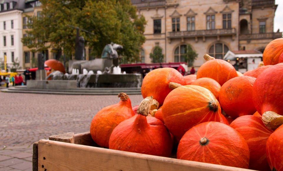 Eine Marktkiste mit zahlreichen Kürbissen gefüllt, im Hintergrund der Domshof